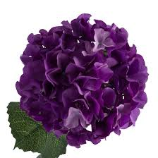 purple hydrangea purple hydrangea s wedding purple