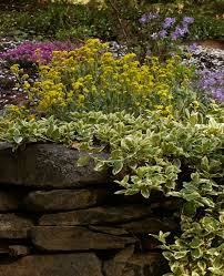 ideas for plants that will cascade over retaining wall new