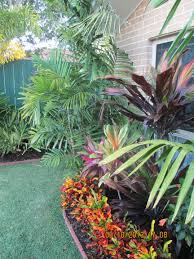 Florida Landscape Ideas by Ptychosperma Macarthurii Croton Border U0026 Cordylines Tropical