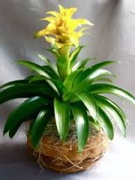 names of indoor house plants tropical indoor plant types