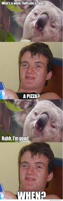 High Koala Meme - high koala weknowmemes