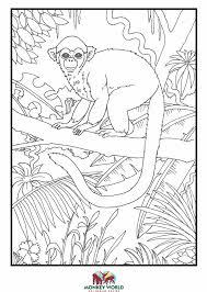 monkey ape rescue centre