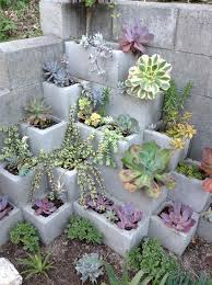 succulent arrangements 50 best succulent garden ideas for 2018