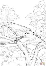 free printable coloring pagesouth carolina state bird and brown