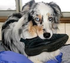 Are All Dogs Colour Blind Reisner Veterinary Behavior Blog
