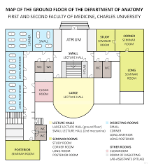 lecture hall floor plan map of the ground floor of the department of anatomy second