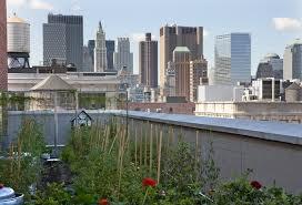 firmdale hotels rooftop kitchen garden