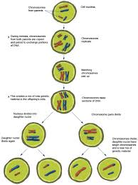 chapter 1 how genes work the new genetics national institute
