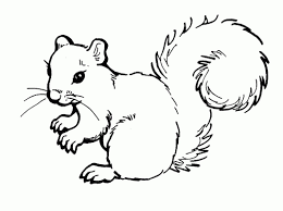 best cute baby squirrel coloring pages for kids womanmate com
