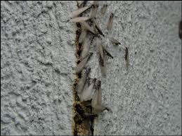 Winged Termites In Bathroom Warnings Signs Of Termites Invading Your Home Senior Com