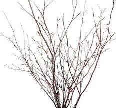 branches for centerpieces branch centerpieces
