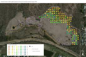 a species of native plant research update monitoring the vegetation of greene prairie uw
