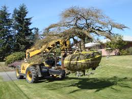 transplanting and tree removal