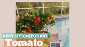 best hydroponics tomato indoor gardening u0026 hydroponics youtube