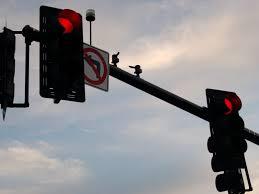 avoiding red light camera tickets red light cameras stalled salem ma patch
