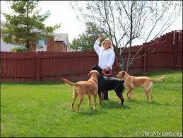 more backyard dog photo fun thrumylens
