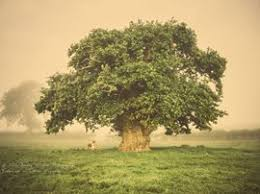 european tree of the year home page
