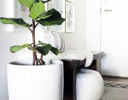 plant large indoor plants stunning cool indoor plants interior