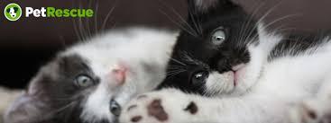 help i u0027ve found a stray cat family petrescue
