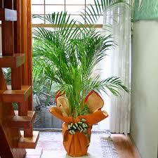 home interior plants plant for home decoration home design