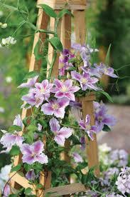garden plants list home outdoor decoration