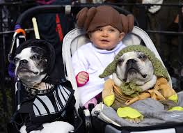 star wars u0027 to starbucks dogs flaunt creative costumes at