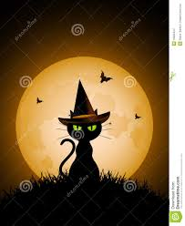 halloween black cat with witch u0027s hat stock images image 19935444