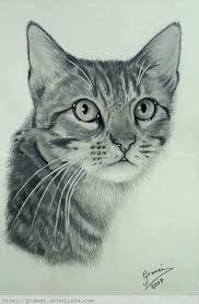 imagenes a lapiz de gatos gatos dibujos a lapiz imagui dibujo pinterest draw cat and