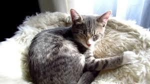 Trixie Cat Hammock by Do Stinky Kitties Like Trixie Baza Little Cat Tree Youtube