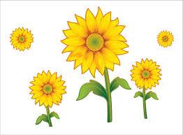 foto wallpaper bunga matahari clipart bunga matahari 1 clipart station