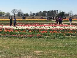 park place lexus spring creek spring fun with pick your own tulips in texas dallas single mom