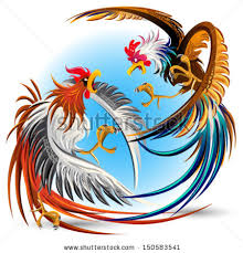rooster fight stock images royalty free images vectors