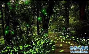 How Do Fireflies Light Up Why Do Fireflies Glow Fireflies Glow Mate Analytical Principle