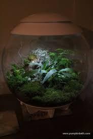 the 25 best traditional terrariums ideas on pinterest terrarium