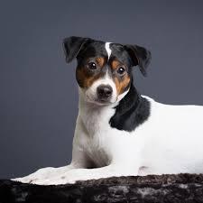 Fox Fur Blanket Faux Fur Dog Blanket Brown Black