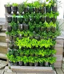 707 best gardening for beginners images on pinterest
