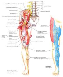 Dermatomes Map Sciatic Nerve Path Choice Image Human Anatomy Image