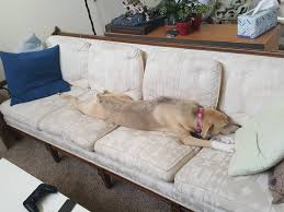 she kicked me off the 7 foot couch to nap i kicked her off a