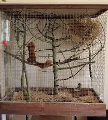 gabbie scoiattoli la storia di tintin lo scoiattolo rosso tintin the squirrel