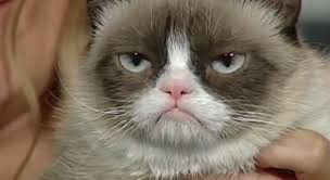 Grouchy Cat Meme - watch morning show host loses it during grumpy cat interview