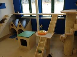 Table Mountain Animal Shelter by Best 25 Cat Play Rooms Ideas On Pinterest Cat Trees House Of