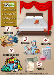 how can you get rid of bed bugs here s how to take control get rid of bed bugs from your house
