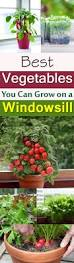 Starting An Organic Vegetable Garden by 11 Best Vegetables To Grow On Windowsill Organic Vegetables