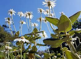 24 best native iowa plants images on pinterest native plants talking plants