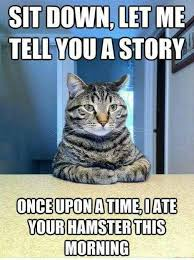 Cats Memes - 8 of the funniest cats memes every cat owner can relate to