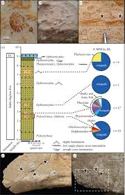 miocene mass strandings from chile proceedings of the royal