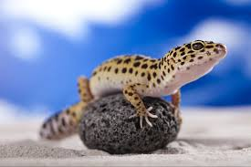 important tips for maintaining lizards u2013 animal clinic of morris