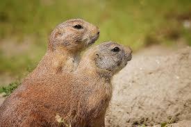 punxsutawney phil u0027s lessons groundhog