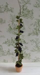 176 best miniature trees plants bushes images on