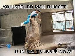 Meme Bucket - image 94935 i has a bucket know your meme